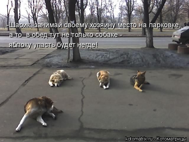 Котоматрица: -Шарик, занимай своему хозяину место на парковке,  а то  в обед тут не только собаке -  яблоку упасть будет негде!