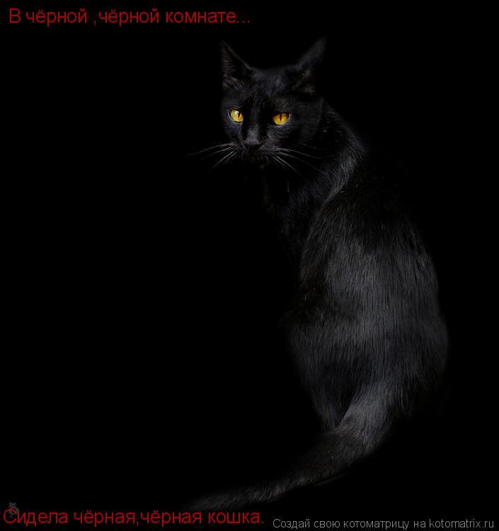 Котоматрица: В чёрной ,чёрной комнате... Сидела чёрная,чёрная кошка.