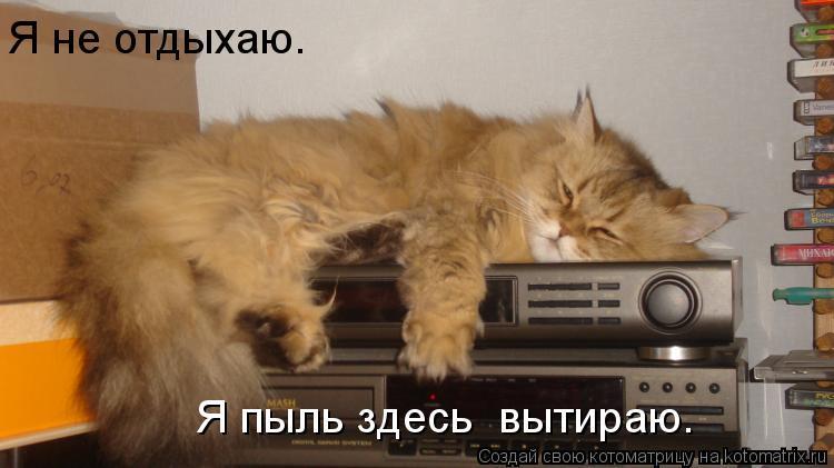 Котоматрица: Я не отдыхаю.  Я пыль здесь  вытираю.