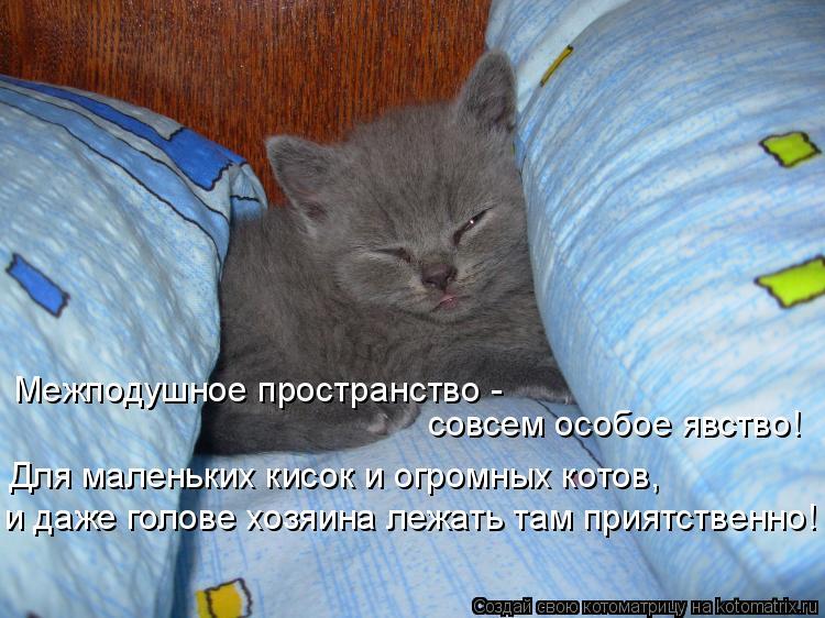 Котоматрица: Межподушное пространство - совсем особое явство! Для маленьких кисок и огромных котов, и даже голове хозяина лежать там приятственно!