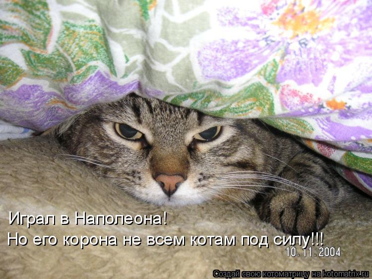 Котоматрица: Играл в Наполеона! Но его корона не всем котам под силу!!!