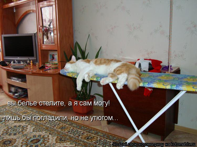 Котоматрица: вы белье стелите, а я сам могу! лишь бы погладили, но не утюгом...
