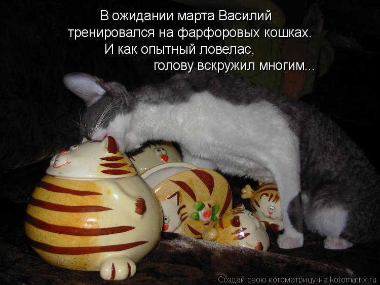 Котоматрица: В ожидании марта Василий тренировался на фарфоровых кошках. И как опытный ловелас,  голову вскружил многим...