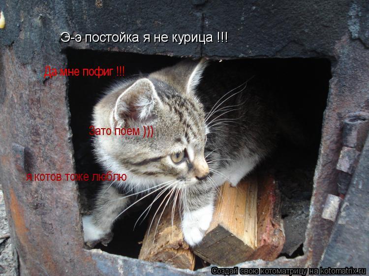 Котоматрица: Э-э постойка я не курица !!! Да мне пофиг  Да мне пофиг !!! Зато поем ))) я котов тоже люблю