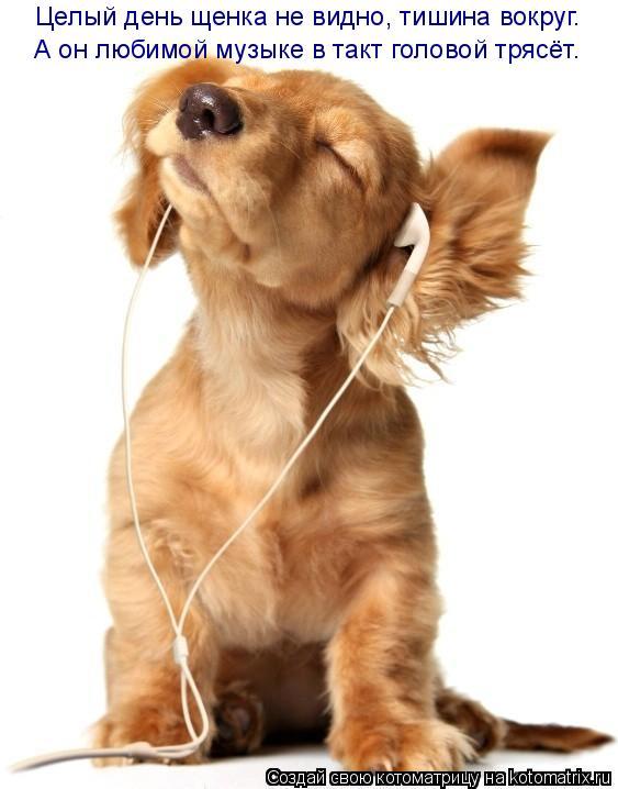 Котоматрица: Целый день щенка не видно, тишина вокруг. А он любимой музыке в такт головой трясёт.