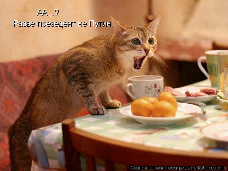 Котоматрица: AA...? Разве презедент не Путин