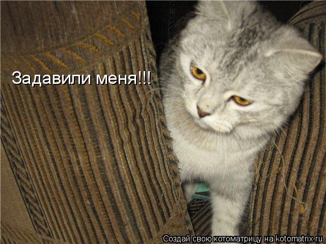 Котоматрица: Задавили меня!!!