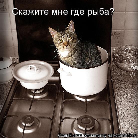 Котоматрица: Скажите мне где рыба Скажите мне где рыба?