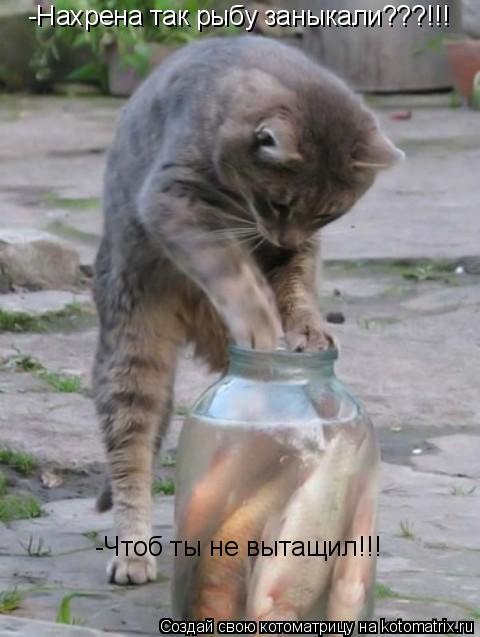 Котоматрица: -Нахрена так рыбу заныкали???!!! -Чтоб ты не вытащил!!!