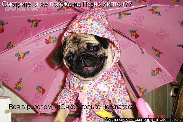 Котоматрица: Смотрите, я же похожа на Пэрис Хилтон?? Вся в розовом))))Очков только не хватает)