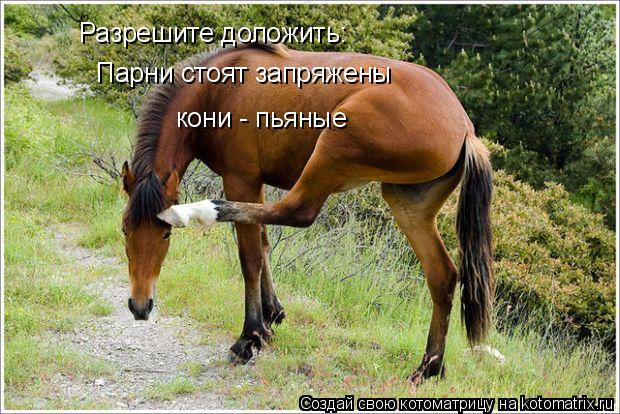 Котоматрица: Разрешите доложить: Парни стоят запряжены кони - пьяные