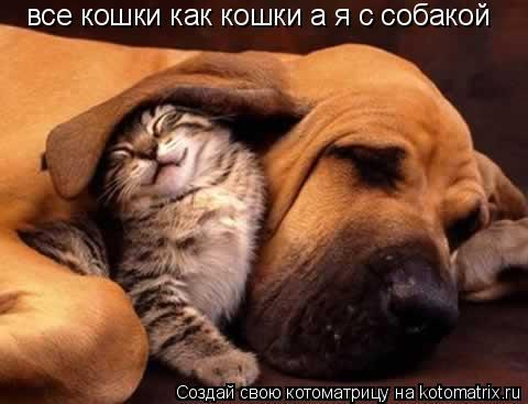 Котоматрица: все кошки как кошки а я с собакой