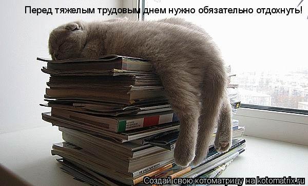 Котоматрица: Перед тяжелым трудовым днем нужно обязательно отдохнуть!