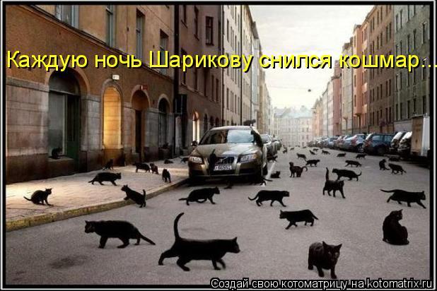 Котоматрица: Каждую ночь Шарикову снился кошмар....