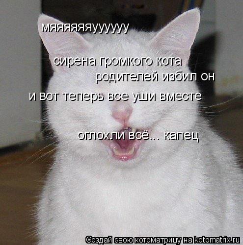 Котоматрица: мяяяяяяуууууу сирена громкого кота родителей избил он и вот теперь все уши вместе оглохли всё... капец