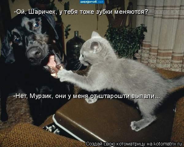 Котоматрица: -Ой, Шаричек, у тебя тоже зубки меняются? -Нет, Мурзик, они у меня от штарошти выпали...
