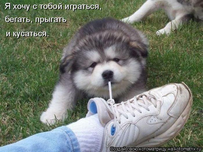 Котоматрица: Я хочу с тобой играться,  бегать, прыгать и кусаться.