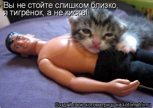 Котоматрица: Вы не стойте слишком близко, я тигрёнок, а не киска! я тигрёнок, а не киска!