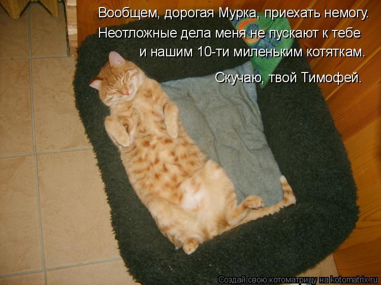 Котоматрица: Вообщем, дорогая Мурка, приехать немогу. Неотложные дела меня не пускают к тебе и нашим 10-ти миленьким котяткам. Скучаю, твой Тимофей.