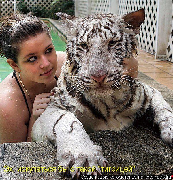 """Котоматрица: Эх, искупаться бы с такой """"тигрицей""""..."""