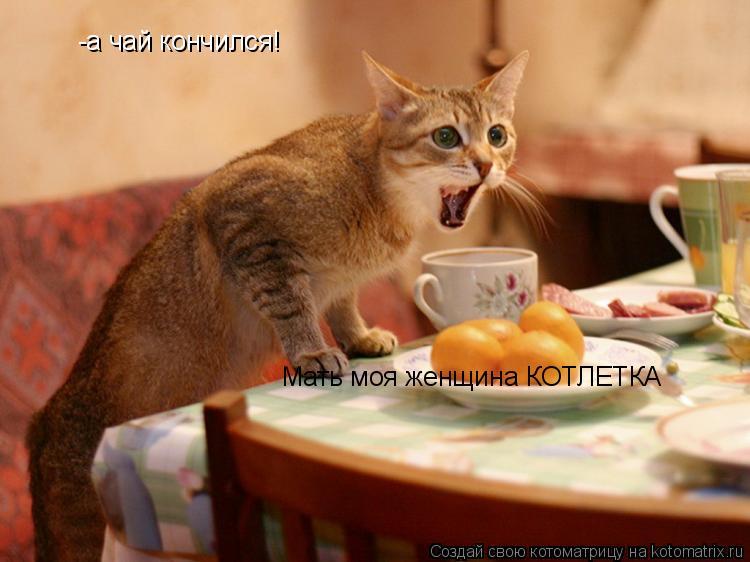 Котоматрица: -а чай кончился!  Мать моя женщина КОТЛЕТКА