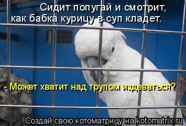 Котоматрица: Сидит попугай и смотрит,  как бабка курицу в суп кладет. - Может хватит над трупом издеваться?
