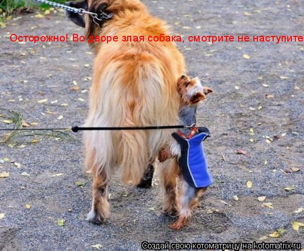 Котоматрица: Осторожно! Во дворе злая собака, смотрите не наступите!