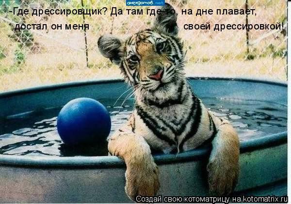 Котоматрица: -Где дрессировщик? Да там где-то, на дне плавает, достал он меня  своей дрессировкой!