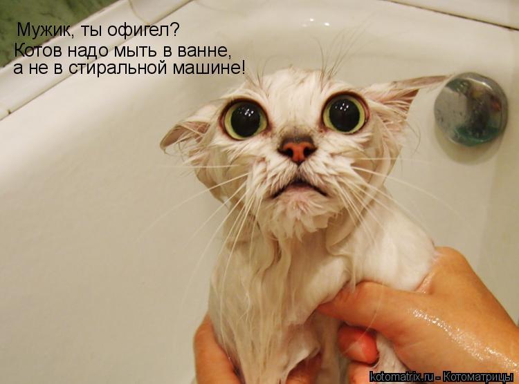 Котоматрица: Мужик, ты офигел? Котов надо мыть в ванне, а не в стиральной машине!
