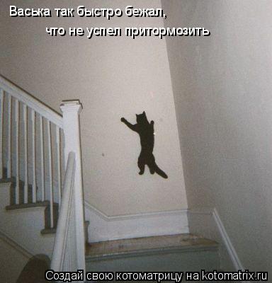 Котоматрица: Васька так быстро бежал, что не успел притормозить