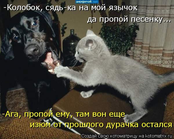 Котоматрица: да пропой песенку... -Колобок, сядь-ка на мой язычок -Ага, пропой ему, там вон еще  изюм от прошлого дурачка остался