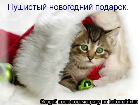 Котоматрица: Пушистый новогодний подарок.