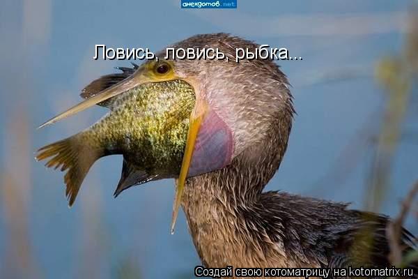Котоматрица: Ловись, ловись, рыбка...