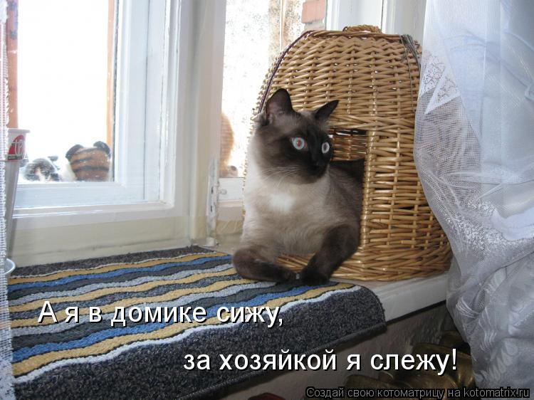 Котоматрица: А я в домике сижу, за хозяйкой я слежу!