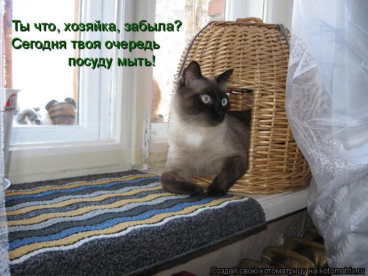 Котоматрица: Ты что, хозяйка, забыла? Сегодня твоя очередь  посуду мыть!