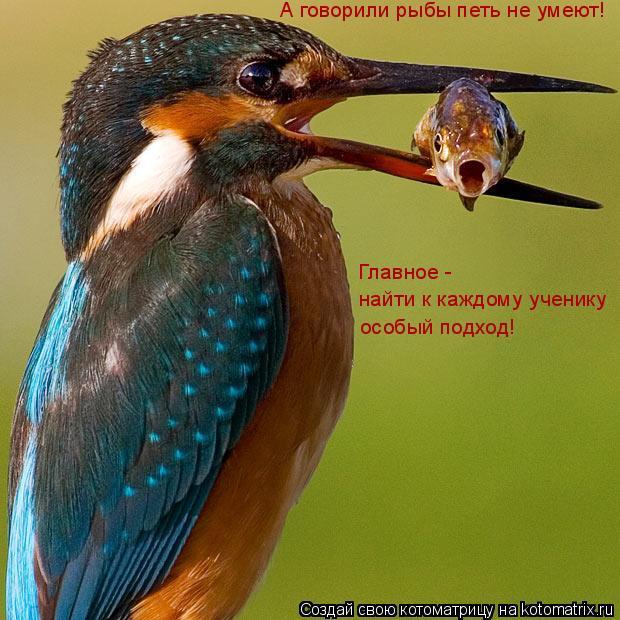Котоматрица: А говорили рыбы петь не умеют! Главное -  найти к каждому ученику особый подход!