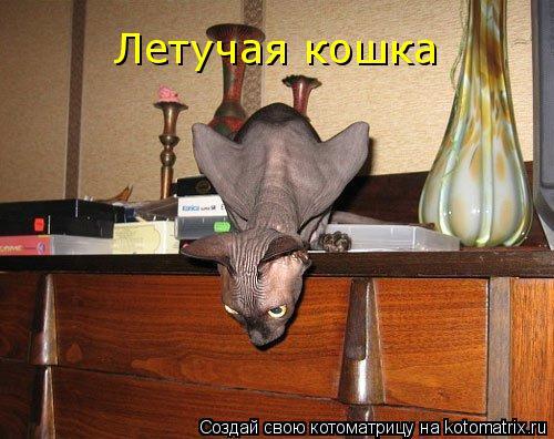 Котоматрица: Летучая кошка