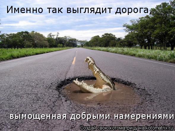 Котоматрица: Именно так выглядит дорога,  вымощенная добрыми намерениями