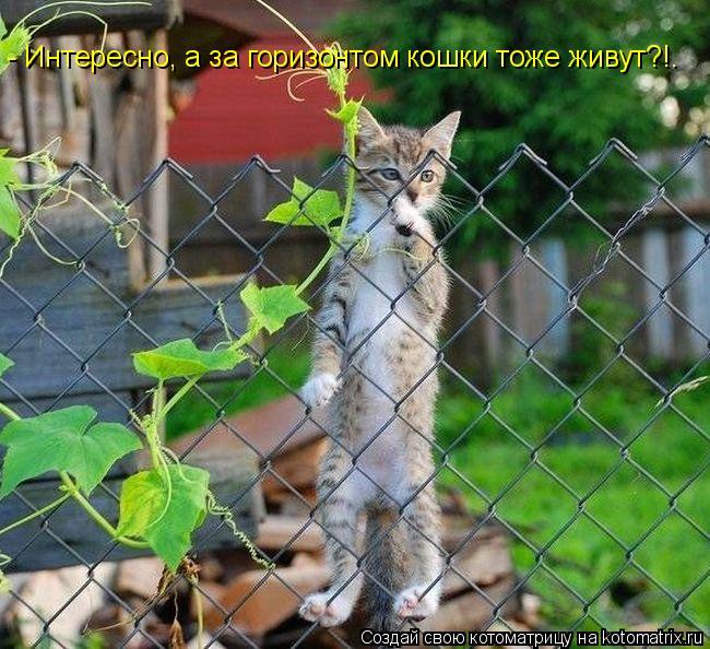 Котоматрица: - Интересно, а за горизонтом кошки тоже живут?!.
