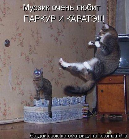 Котоматрица: Мурзик очень любит ПАРКУР И КАРАТЭ!!!