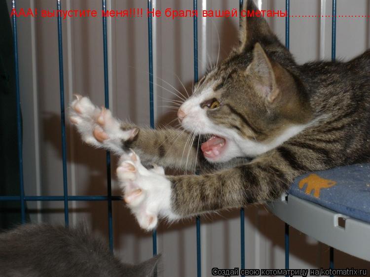 Котоматрица: ААА! выпустите меня!!!! Не браля вашей сметаны..........................