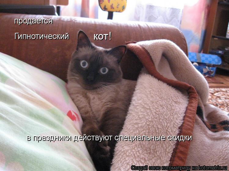 Котоматрица: Гипнотический кот! продается в праздники действуют специальные скидки