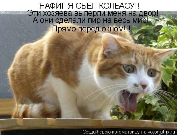Котоматрица: НАФИГ Я СЬЕЛ КОЛБАСУ!! Эти хозяева выперли меня на двор! А они сделали пир на весь мир! Прямо перед окном!!!