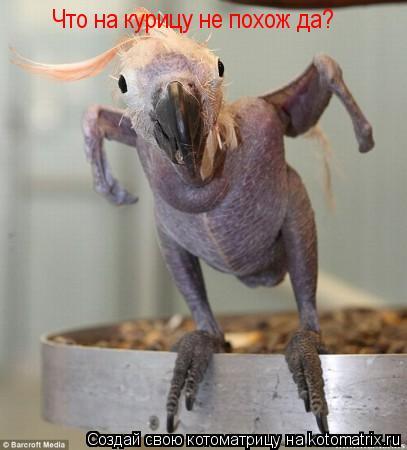 Котоматрица: Что на курицу не похож да?