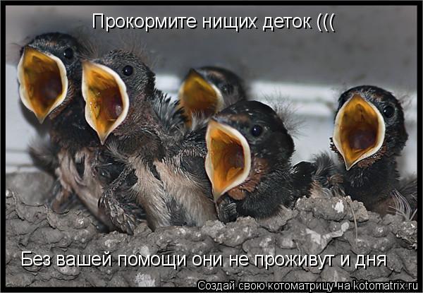 Котоматрица: Без вашей помощи они не проживут и дня Прокормите нищих деток (((