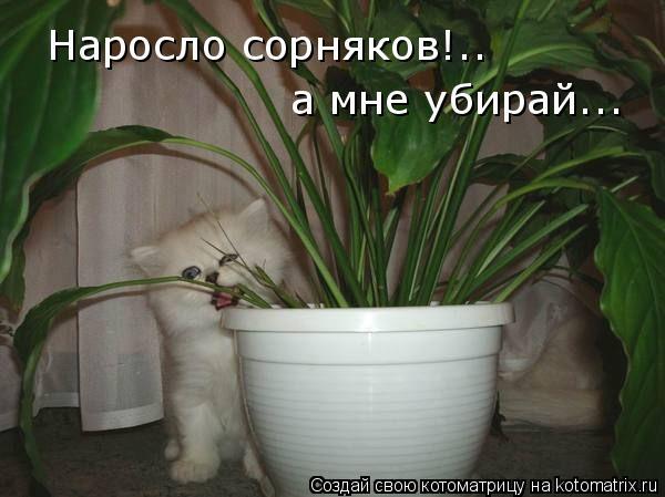 Котоматрица: Наросло сорняков!.. а мне убирай...