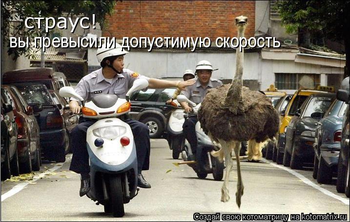 Котоматрица: страус! вы превысили допустимую скорость