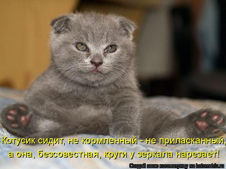 Котоматрица: Котусик сидит, не кормленный - не приласканный, а она, безсовестная, круги у зеркала нарезает!