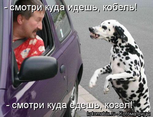Котоматрица: - смотри куда идешь, кобель! - смотри куда едешь, козел!