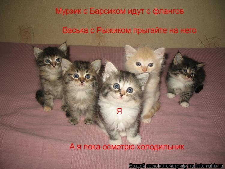 Котоматрица: Мурзик с Барсиком идут с флангов Васька с Рыжиком прыгайте на него  А я пока осмотрю холодильник Я